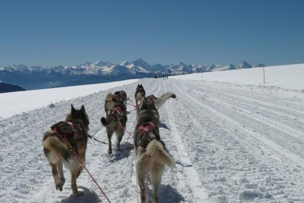 huskys-glacier-ks-juli08-29